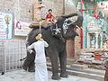 Elephant in a temple, Jodhpur.jpg
