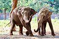 Elephantsofindia.jpg