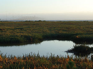 Emeryville mudflats distant San Francisco.JPG