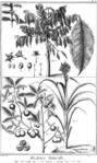 Encyclopedie volume 5-158.png