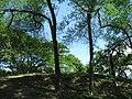 Entry of the mound of Chandraketugarh 02.jpg