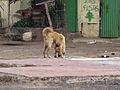 Espargos dog.jpg