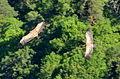 Eurasian Griffon Vulture (Gyps fulvus) (5906397996).jpg