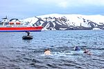 Excursion No. 12. into the old caldera of Deception Island.it's absolutely amazing what humans will do for fun.the Polar plunge, witnessed by an array of chicken photographers and a few bewildered (25894991812).jpg