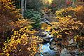 Fall-foliage-forest-creek-scenery-sunset - West Virginia - ForestWander.jpg