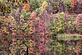 Fall-winecellar-lake - West Virginia - ForestWander.jpg