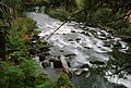 Fall Color along River, Rogue River-Siskiyou National Forest (36969021351).jpg