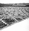 Farmers of forty centuries - Field covered with piles of canal mud.jpg