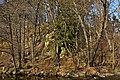 Felsbildungen samt zugehörigem Baumbestand Brühl bei Weitra 2014-02 NÖ-Naturdenkmal GD-071.jpg
