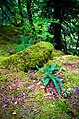 Fern, Moss, Lichen and Vine Maple Detail-Mt Hood (30036223171).jpg