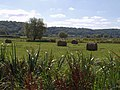 Field beside Beercrowcombe Drove - geograph.org.uk - 558690.jpg