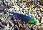 Fish 4 (30962059476).jpg