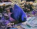 Fish 4 (4386587491).jpg