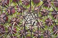 Fish hook Cactus Without wool.jpg