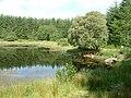 Fishing pond - geograph.org.uk - 1368573.jpg