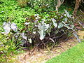 Flickr - brewbooks - Unknown plants at Paloma Gardens.jpg
