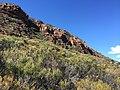 Flinders Ranges SA 5434, Australia - panoramio (159).jpg