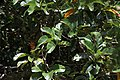 Flora from Parambikulam T R (1).jpg