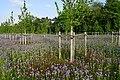 Floraison des plantes mellifères au Parc de Sceaux (France) (47062039664).jpg