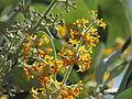 Flores en el Jardín Botánico de Viña del Mar 17.JPG