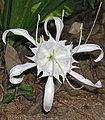 Flower with pollen-Edit1.jpg