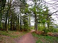 Footpath in Dymock Forest. - geograph.org.uk - 1251118.jpg