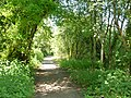 Footpath in the woodland - panoramio.jpg
