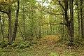 Forêt Départementale de Méridon à Chevreuse le 29 septembre 2017 - 50.jpg
