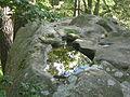 Forêt de Fontainebleau 2 - A P1210795 LV.JPG