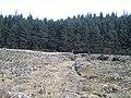 Forest, Gleann Mor - geograph.org.uk - 150779.jpg