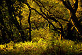 Forest (2322662305).jpg