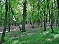 Forest - panoramio - paulnasca (17).jpg
