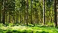 Forest Light (7442653794).jpg