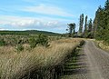 Forest Track, Linfern Road - geograph.org.uk - 260656.jpg