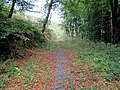 Forest Track - geograph.org.uk - 2654795.jpg