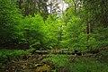 Forest Turnover (8742280067).jpg