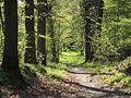 Forest path in Yvelines - France.jpg