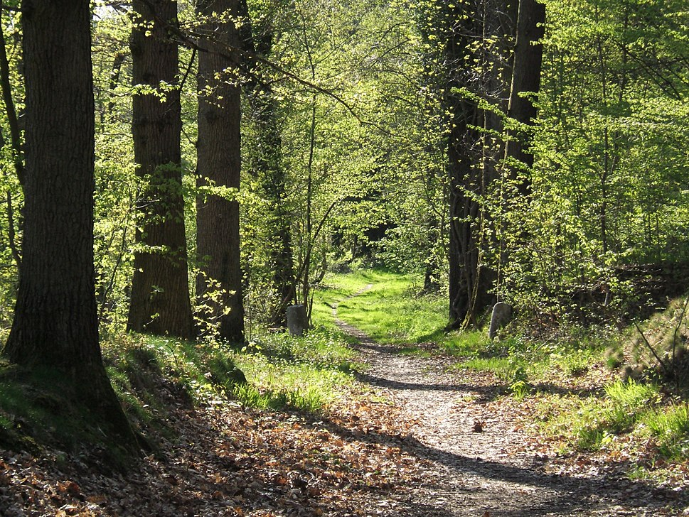 Forest path in Yvelines - France