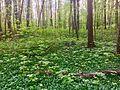Frühling im Stadtwald Frankfurt 5.jpg