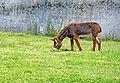 France-001672 - Donkey Park (15478581245).jpg