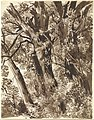Franz Innocenz Kobell (German - Trunks and Branches - Google Art Project.jpg