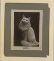 Fritz the cat (HS85-10-11178) original.tiff