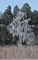 Frosty plants.jpg
