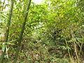 Gaobei Village - bamboo forest - DSCF3245.JPG