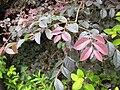 Gardenology.org-IMG 2596 rbgs11jan.jpg
