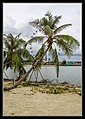 Gardens by the Marina Bay-17 (8327001377).jpg
