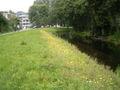 Gele ganzenbloem 08-08-2005 12.52.30.JPG