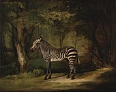 A portrait of a zebra by George Stubbs