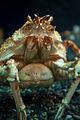 Georgia Aquarium (4662883421).jpg