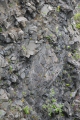 Gersfeld Gr Nalle Quarry Center Basalt Formation Detail s E 2.png